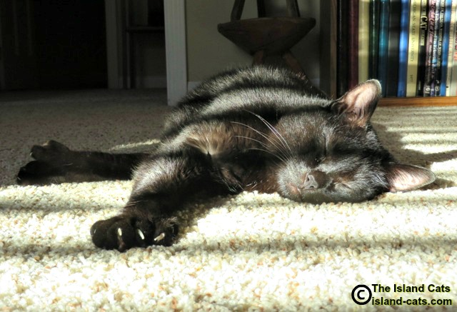 Ernie sleeping in the sun