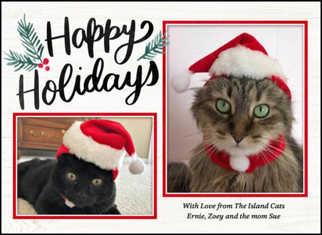 Island Cats Christmas Card