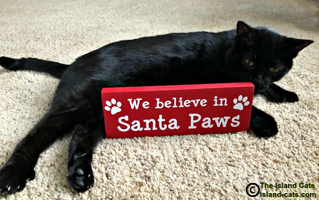 We Believe in Santa Paws