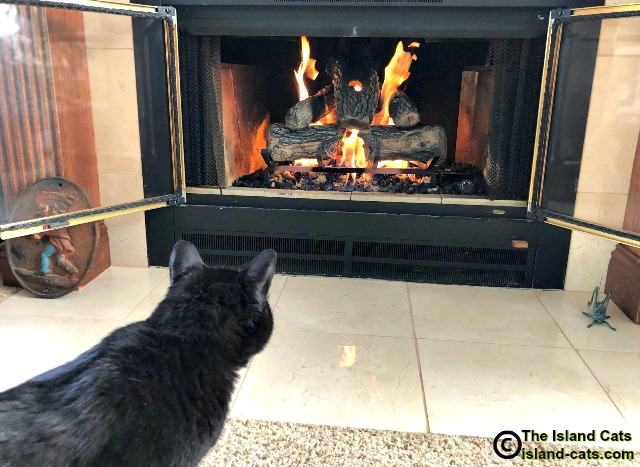 Ernie staring at fireplace