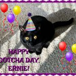 Happy Gotcha Day, Ernie!