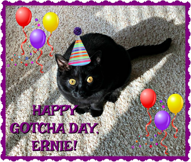 Happy Gotcha Day, Ernie
