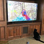Binge Watching Bird TV