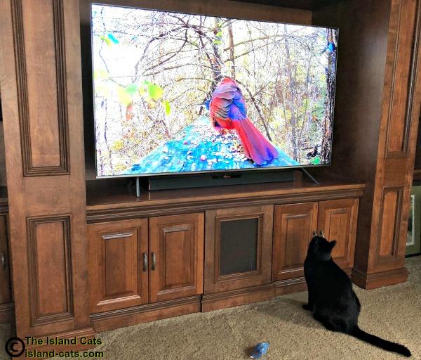 Ernie watching TV