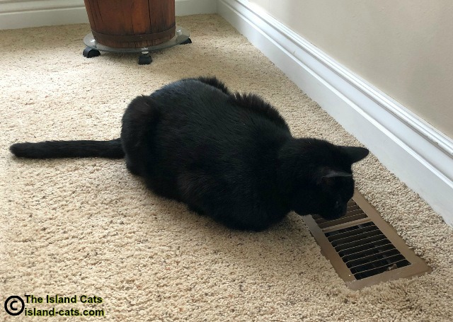 Ernie looking down heat vent