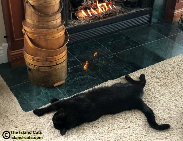 Ernie lying by the fire