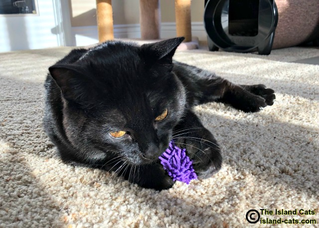 Ernie with his purple toy