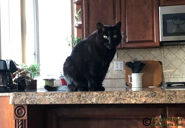 Ernie on kitchen counter