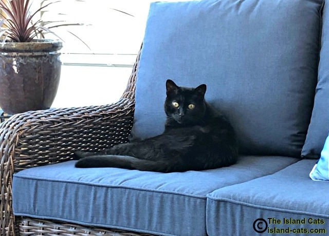 Cat sitting on couch