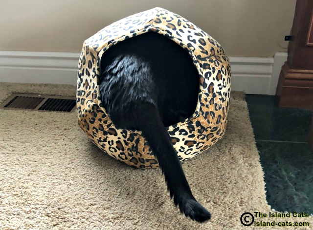 Ernie with tail end out of cat ball
