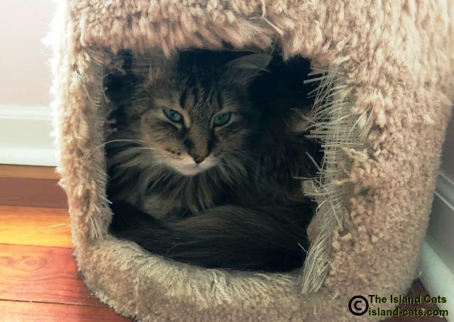 Cat in condo