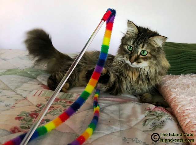 Cat playing with wand toy
