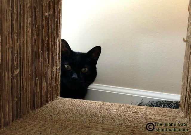 Ernie hiding behind cardboard cube