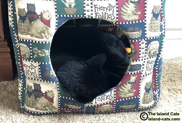 Ernie sleeping in his cube