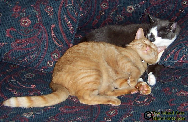 Scooter and Wally curled up together