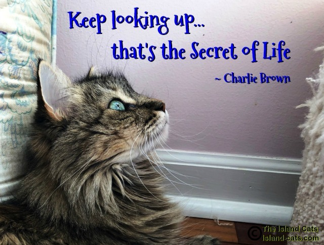 Cat looking up at quote Keeping looking up, that's the Secret of Life