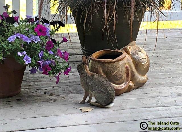 bunny rabbit on deck
