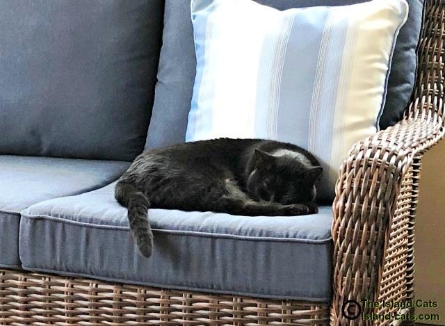 Ernie snoozing in sunroom