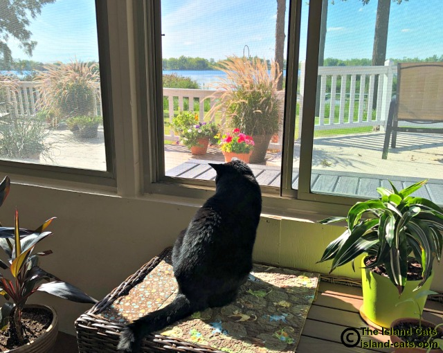 Ernie checking out the view from the sunroom
