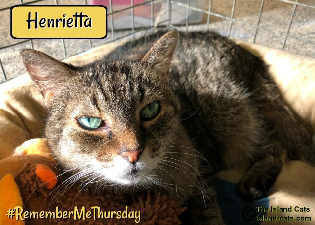 Henrietta, one of the shelter cats #RememberMeThursday