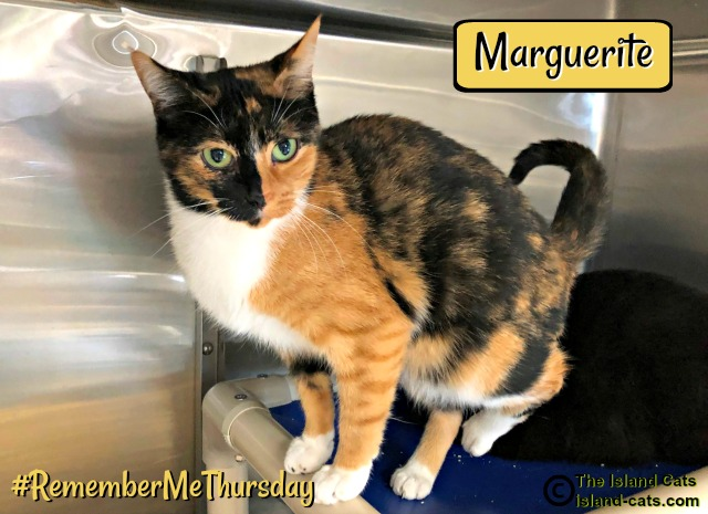 Marguerite, one of the shelter cats #RememberMeThursday