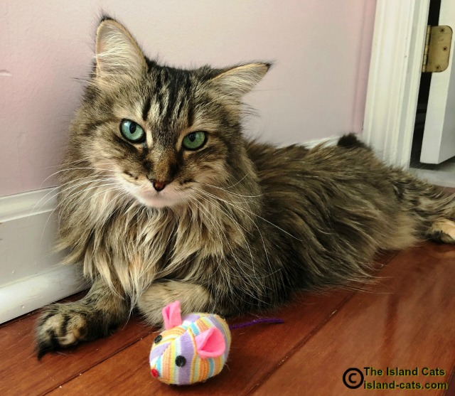 Zoey sitting with her toy mouse