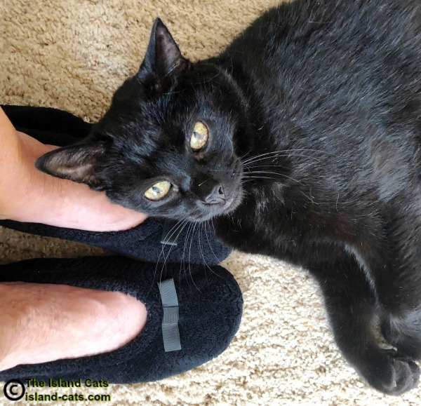 Ernie lying on the mom's feet