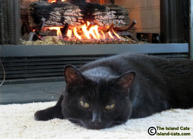 Ernie in front of the fireplace