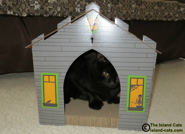 Ernie in haunted house