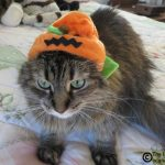 A Halloween Flashback Blooper #PetPhotoFails