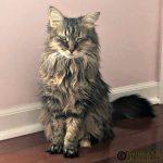 Statue Cat