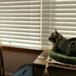 Eliminate Pet Odors with the Okaysou AirMic 4S Air Purifier