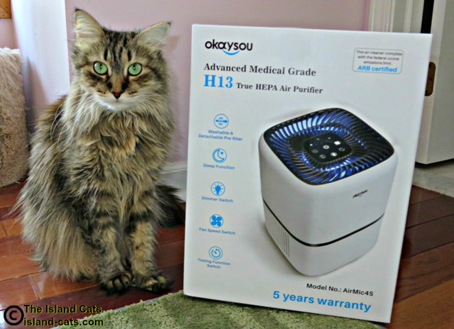 Zoey standing next to Okaysou air purifier box
