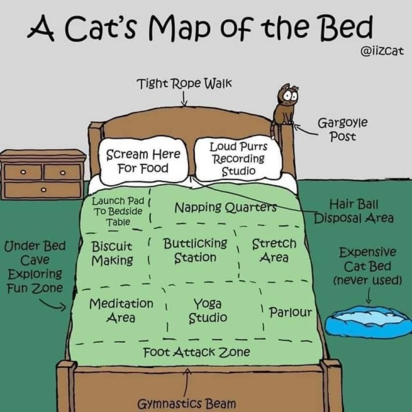 A Cat's Map of the Bed graphic