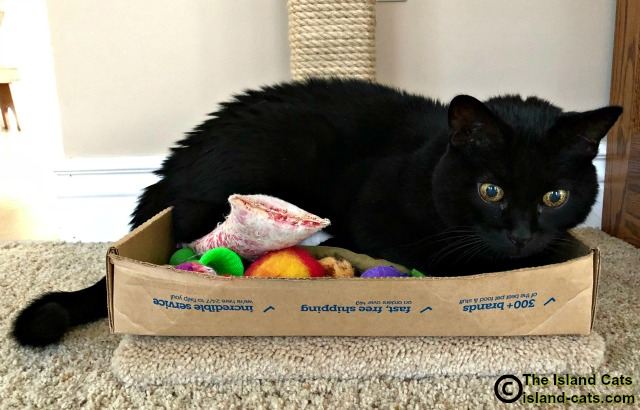 Ernie lying in a box of his toys