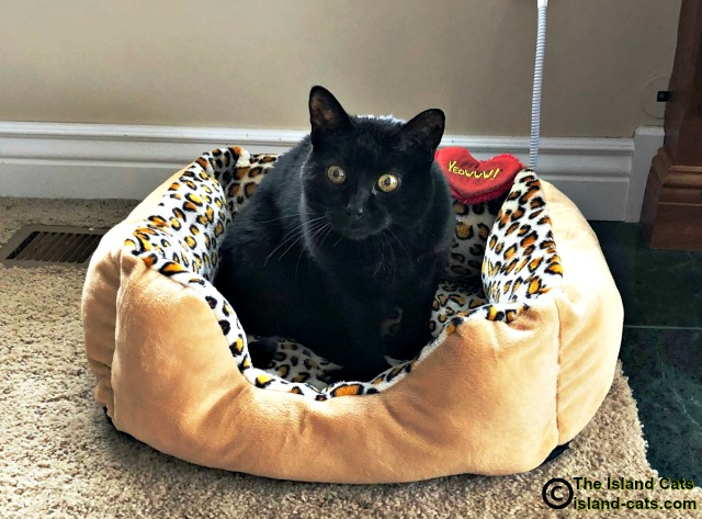 Ernie in his new heated bed