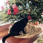 Christmas Tree Inspector