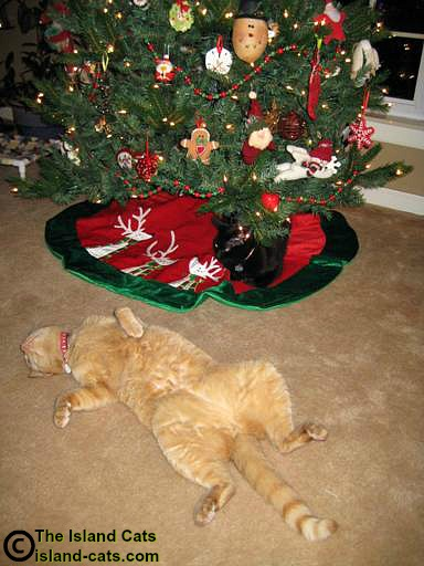 Cat spread eagle in front of the Christmas tree