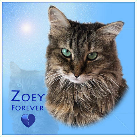 Zoey Forever graphic