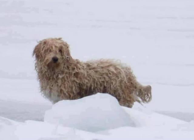 Close up of dog on ice