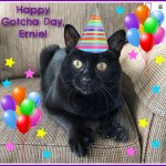 It's Ernie's Gotcha Day!