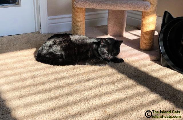 Ernie in a big sunpuddle