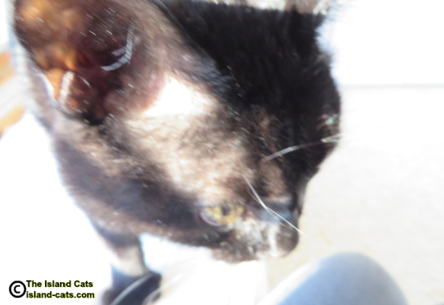 Out of focus, over exposed close up of Ernie
