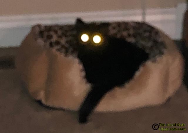 dark photo of Ernie with laser eyes