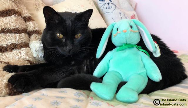 Ernie with stuffed bunny