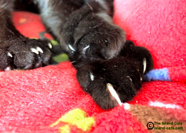 Close up of Ernie's claws