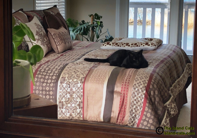 Ernie lying on bed