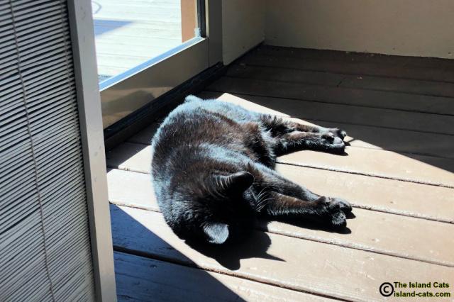 Ernie lying in the sun by the door