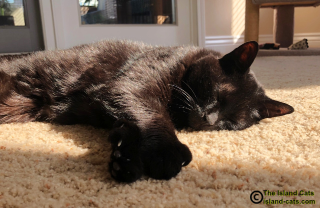 close up of Ernie lying in the sun