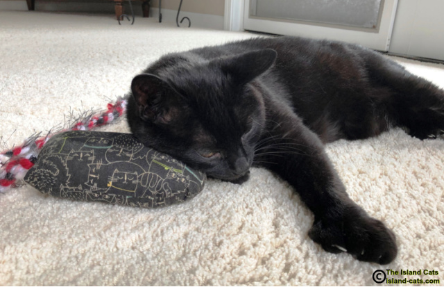 Ernie lying with his head on his Mad Rat toy